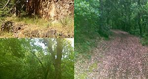 Alcune foto in un'unica immagine di sentieri e scorci di Monte Arrubiu a Soleminis