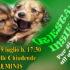 Banner R...Estate Insieme 2018, cani in passerella per dire NO all'abbandono - Soleminis - 29 Luglio 2018 - ParteollaClick